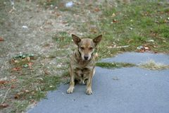 Hungry stray dog ​​on the street royalty free stock images
