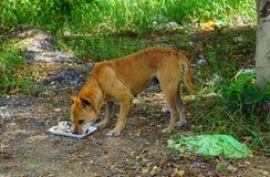Hungry stray dog homeless Royalty Free Stock Photos