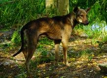 Hungry stray dog homeless Royalty Free Stock Photography