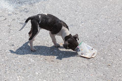 Hungry stray dog Royalty Free Stock Images
