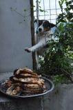 Hungry Stray Dog Wants Food Stock Image