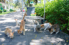 Hungry street cats eating Royalty Free Stock Images