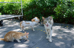 Hungry street cats eating Stock Photography