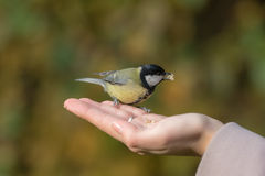 Hungry tit Royalty Free Stock Images
