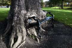 The hungry tree. Old Hungry tree in King`s inn Park. Dublin .Ireland royalty free stock photos