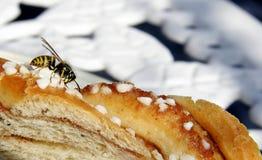 Hungry wasp. Wasp feeding on a cinamonroll royalty free stock photography