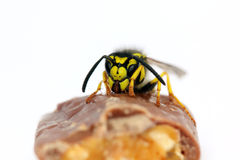 Hungry wasp Royalty Free Stock Photos