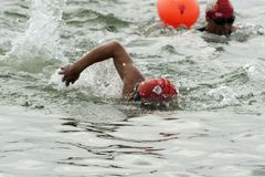 Hunneflussschwimmer Lizenzfreie Stockbilder
