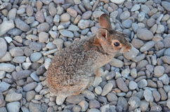 Hunny兔宝宝 库存图片