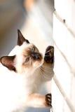 hunt мухы Стоковая Фотография RF
