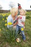 hunt поля семьи пасхального яйца daffodil стоковые изображения rf