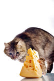 Hunt. Cat watching mouse eating cheese royalty free stock photo