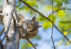 Squirrels and seasons are unseparable Stock Photos