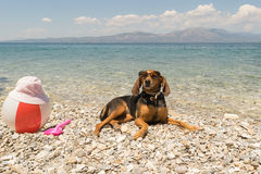 Hunt dog wearing sunglasses resting at a beach. Royalty Free Stock Photography