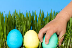Hunt for easter eggs Stock Images
