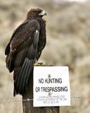 hunt nie złoty orzeł Fotografia Royalty Free