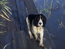 hunt psa Obrazy Royalty Free