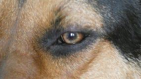 Huntaway-Hund 17 stockbilder