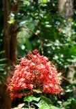 Hunte ` s arbeta i trädgården Barbados Royaltyfria Bilder
