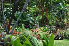 Hunte-` s Gärten Barbados lizenzfreie stockbilder