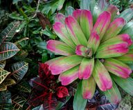 Hunte-` s Gärten Barbados Lizenzfreie Stockfotografie