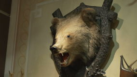 Hunted Bear Trophy on Wall stock footage