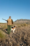 Hunter. Quail hunter in camouflage clothing walking across the field Stock Photography