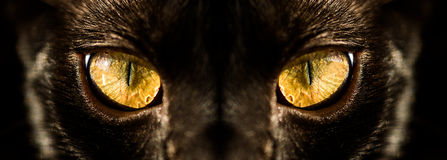 Hunter. Black Cat with hipnotizing yellow eyes Stock Photos