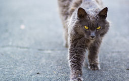 Hunter Cat Royaltyfria Bilder