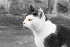 Hunter. Cat watching the horizon looking for his lunch Royalty Free Stock Images