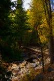 Hunter Creek Aspen Foto de Stock Royalty Free