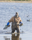 Hunter with Decoys. Duck Hunter putting out decoys Royalty Free Stock Photos