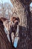 Hunter dog Stock Images