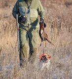 Hunter with a dog on a leash carries a downed bird Epagneul Breton, spaniel breton, Brittany Spaniel, Bretonischer Spaniel. Fall time royalty free stock image