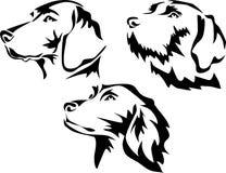 Hunter dog portrait Royalty Free Stock Photography