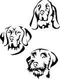 Hunter dog portrait Stock Images