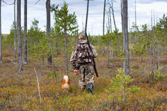 Hunter with dog walking in the swamp pine forest Stock Photography