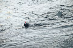 Hunter Fisherman in Wetsuit with a Speargun Looks Under the Water in Search of Fish Royalty Free Stock Photo