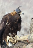 Hunter with a golden eagle Royalty Free Stock Image