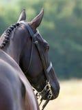 Hunter Headshot Royalty-vrije Stock Afbeeldingen
