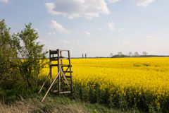 Hunter high level and rape field. A small  hunter high level is standing in front of a yellow rape field Royalty Free Stock Photos