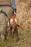 Hunter holding dead pheasants Royalty Free Stock Image