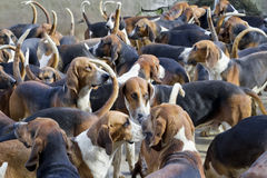 Hunter hounds dogs background Stock Photos