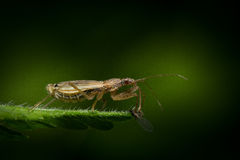 The hunter and the hunted. Macro photos of insects in action royalty free stock photography