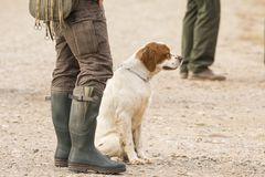 Hunter hunting with dogs in nature. Hunter hunting with beautiful dogs in nature stock photo