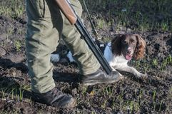 Hunter and hunting dog on the field. Hunter with rifles and hunting dog on the field Stock Photo