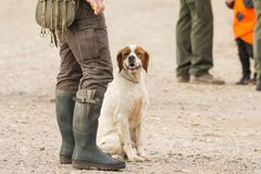 Hunter hunting with dogs in nature. Hunter hunting with beautiful dogs in nature stock photos
