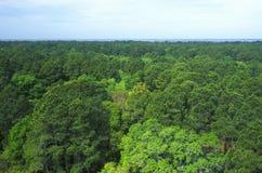 Hunter Island, Hilton Head, SC, Live Oak, Long Pine, Sweet Gums, Palmara Stock Image