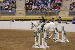 Hunter Jumper Grand Stakes Royalty-vrije Stock Afbeelding
