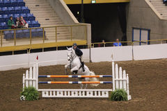 Hunter Jumper Grand Stakes Royalty Free Stock Images